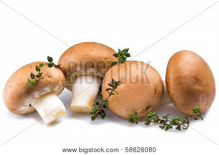 mushrooms with marjoram herb isolated on white background