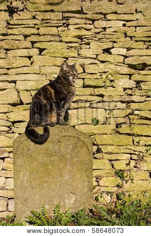 Cat Sat On A Tombstone