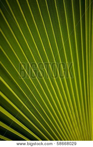 Beautiful Pattern Of A Palm Leaf