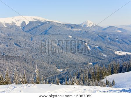 Winter Mountain Landscape With Alpine Skiing Tracks Cuttings In A Forest
