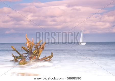 Driftwood And Sailing Boat