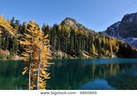Golden Larch Trees And Blue Lake Trail