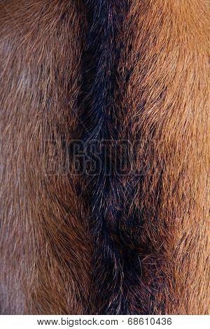 anglo nubain goat wool background