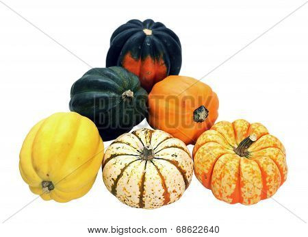 Acorn And Carvinal Squash