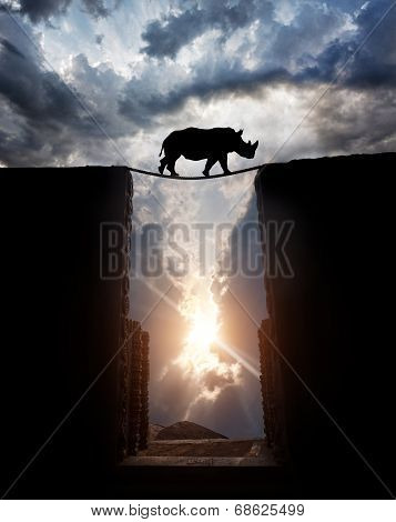 Rhino Over The Abyss