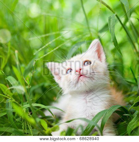 little red cat in green grass