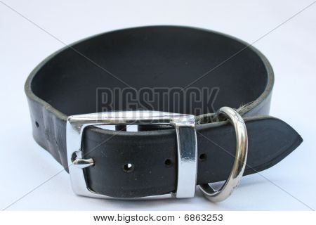 greyhound collar.