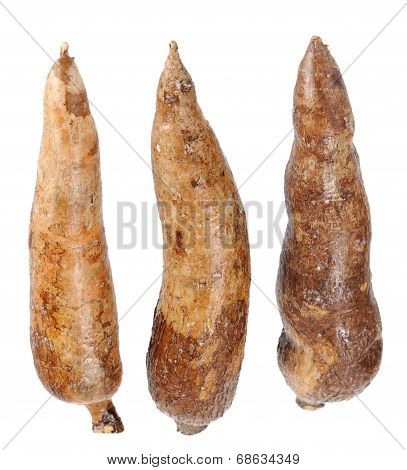 Three Whole Manioc