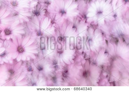 Dreamy background of pink daisy flowers, flowery field, natural abstract freshness, spring garden, slow motion photography effect, fine art