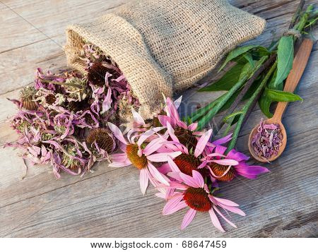 Bunch Of Healing Coneflowers And Sack With Dried Echinacea Flowers On Wooden Plank