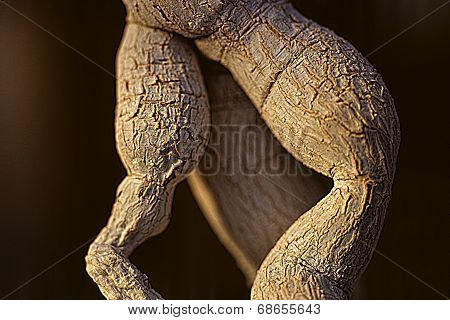 Cactus Trunk