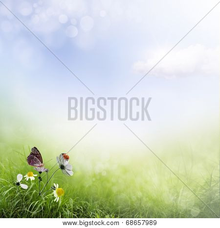 Spring background with flowers and ladybug