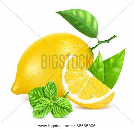 Fresh lemon with leaves, slice of lemon, mint and water drops. Vector illustration.