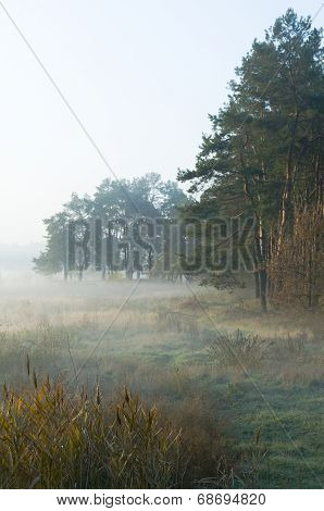 Autumn Morning On The Edge Of The Wood