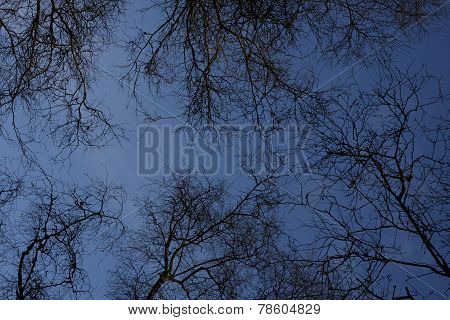 Silhouetted Trees At Twilight