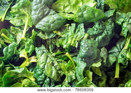 Closeup Of Fresh Spinach