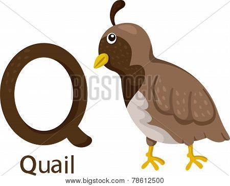 Illustrator of Q with quail