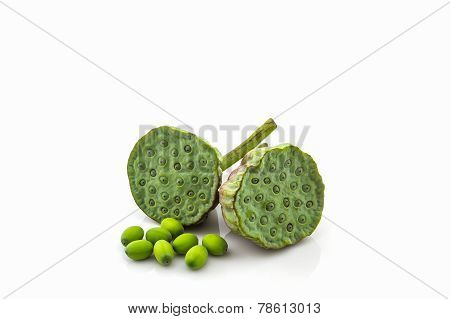 Calyx, Lotus Seeds Green .