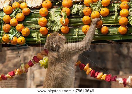 Thailand Monkey Party ( Thailand Monkey Buffet ).