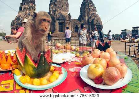 Thailand Monkey party (Thailand Monkey Buffet ).