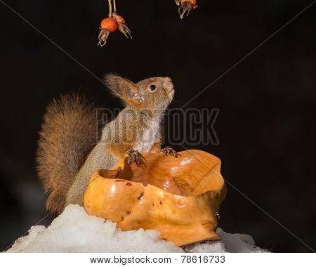 Squirrels Dark Sight