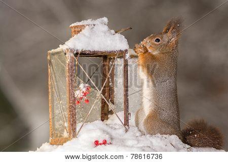 Squirrels Christmas