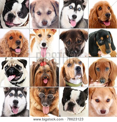Dog portraits collage