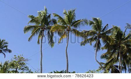 caribbean landscapes