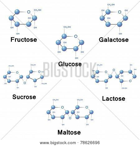 Sugar molecules