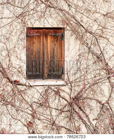 Wooden Window In Autumn