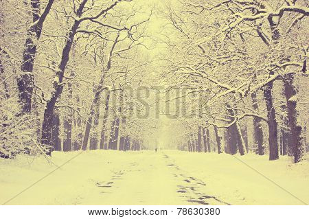 Snow-covered Trees Alley