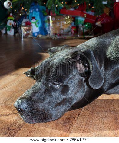Holiday Nap