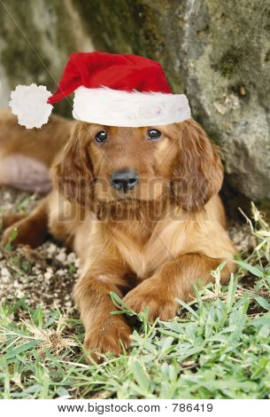 Merry Christmas puppies!!
