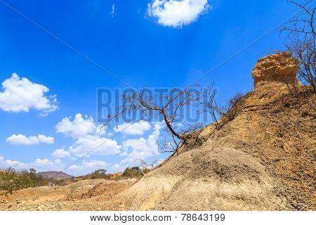 Acacia Tree Against A Cloudy Blue Sky