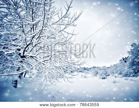 Beautiful wintertime landscape, blue nature background, tree in the park covered with snow and hoarfrost, winter holiday season, snowy weather in dreamy forest