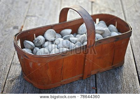 Vintage wood basket filled with fresh live clams