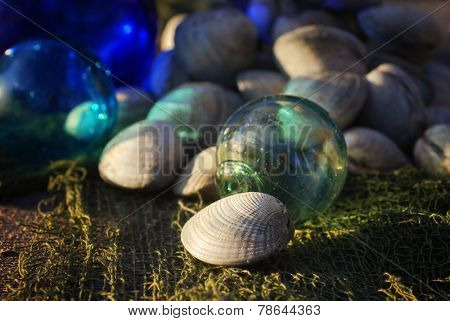 Fresh clams on netting with antique glass fishing floats in sunlight