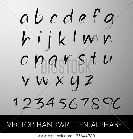 vector handwritten alphabet. calligraphic brushed letters and nu