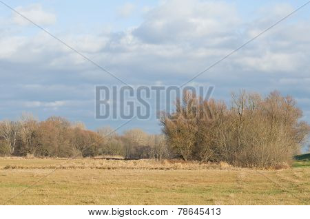 Floodplain Forest Landscape