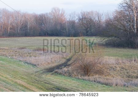 Car Tracks In Floodplain