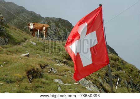 Swiss Flaq And Cow On Meadow.