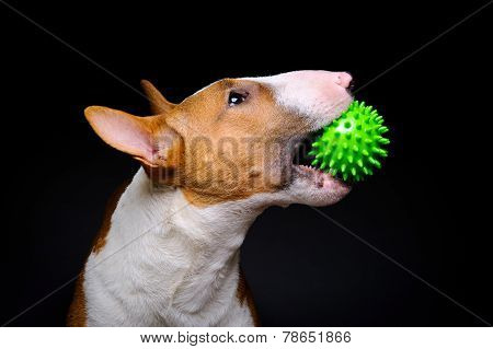 Dog green ball