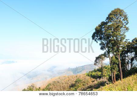 Mountain And Sea Of Fog