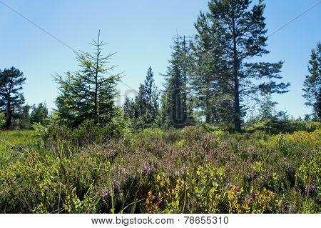 Natural landscape in northern Black Forest