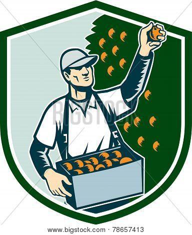 Fruit Picker Worker Picking Plum Shield