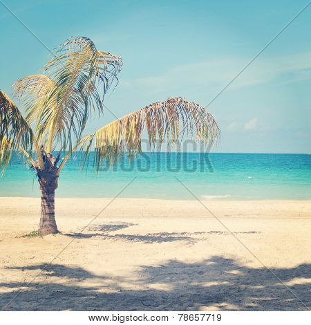 Beautiful Instagram Of Lone Palm Tree On A Tropical Beach