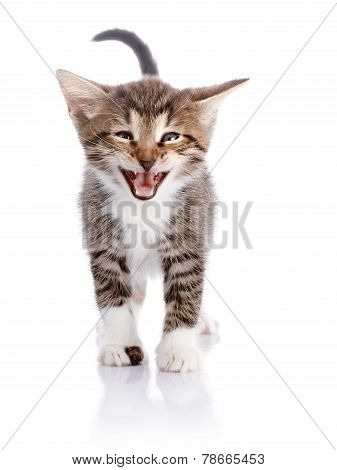 The Kitten On A White Background.