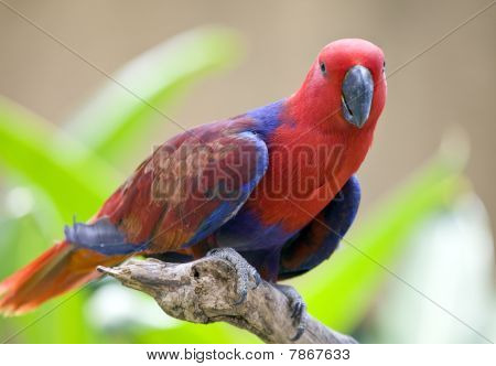 bright large tropical parrot sit on a branch