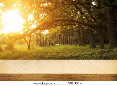 Wooden floor with planks at avenue of oak trees in morning with golden sun