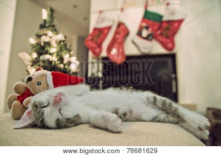 Merry Christmas cat. Kitten under tree. Santa